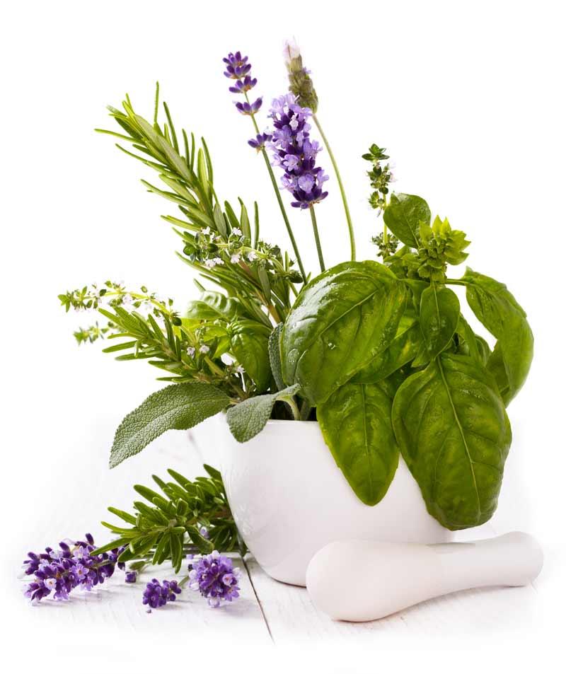 Helfen-Pflanzen-gegen-Muecken