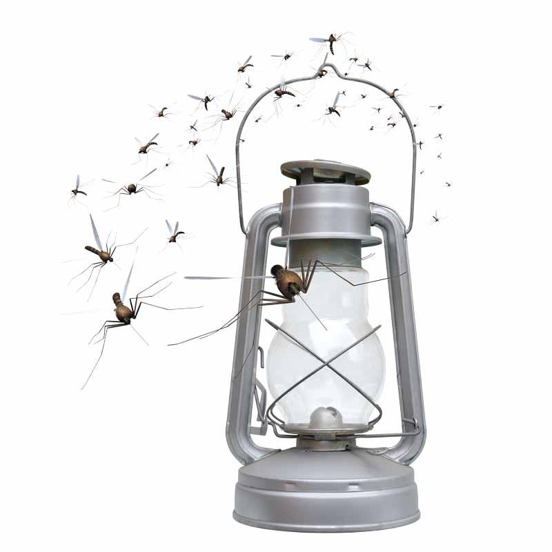 Mücken kommen ans Licht